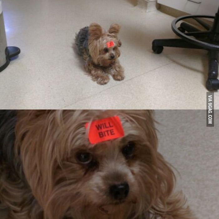 My co worker brought her dog to work - 9GAG