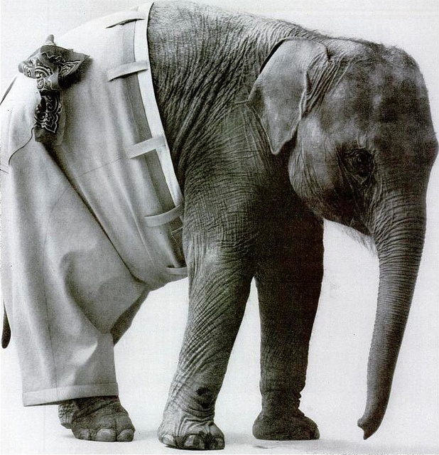 It's an elephant. Wearing pants. How can you NOT laugh?!