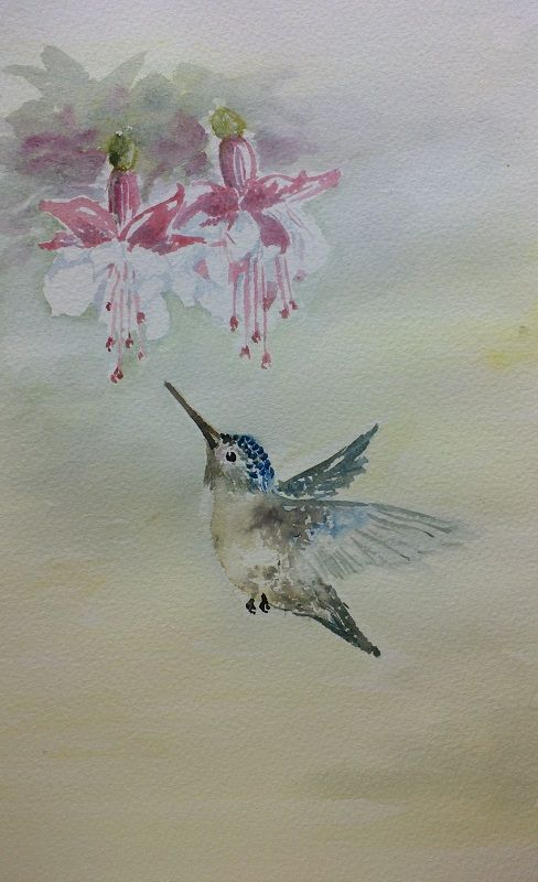 Hummingbird aquarelle