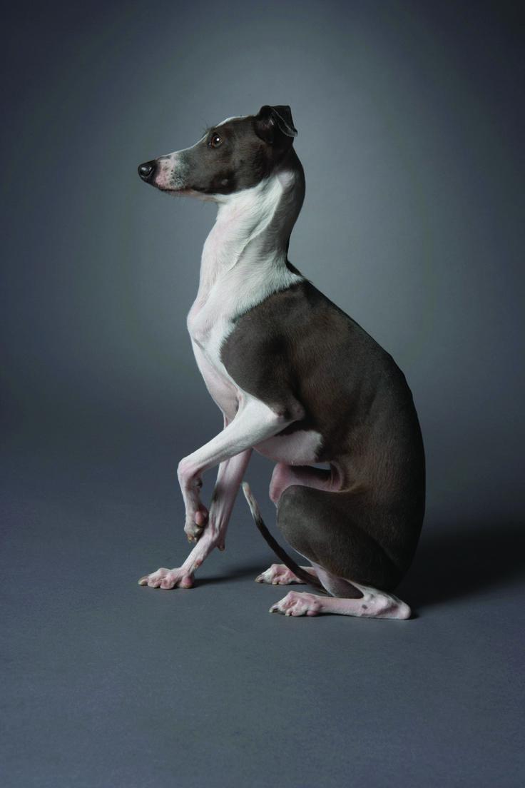Sicilian Dog Names