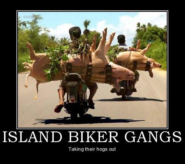 abe5d17d79a7767da9e1974b4370861f biker gangs bike stuff top 25 best biker gangs ideas on pinterest one man gang,Biker Gang Meme