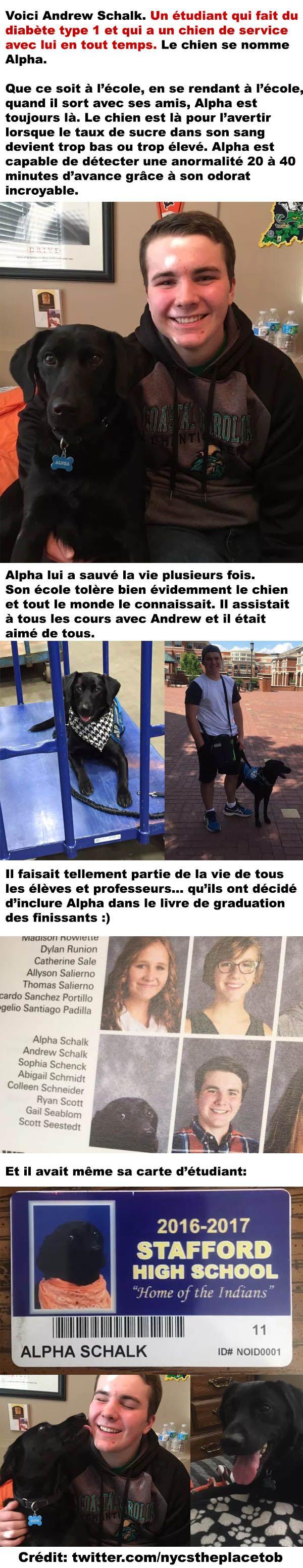 La magnifique histoire du chien de service Alpha - ConneriesQc