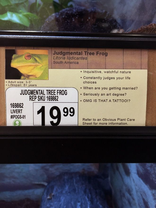 Best Local Pet Stores Ideas On Pinterest Terrarium Glass - This guy replaces pet names with fake labels in local pet store and its hilarious
