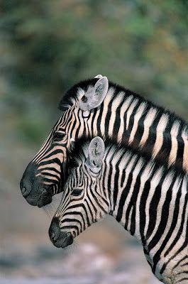 Animales salvajes (16 fotografías en alta resolución) | Banco de Imágenes, Fotos y Postales...