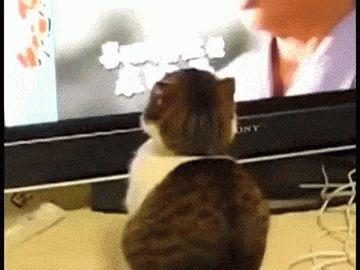 Gato Assustador