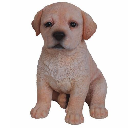 Golden Labrador Puppy Pet in Gift Box