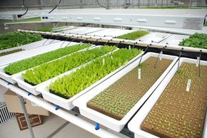 Rimol greenhouse systems works with american hydroponics for Hydroponic bed liner