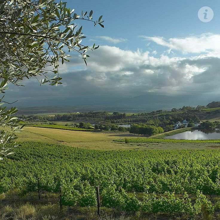 Paarl Winelands