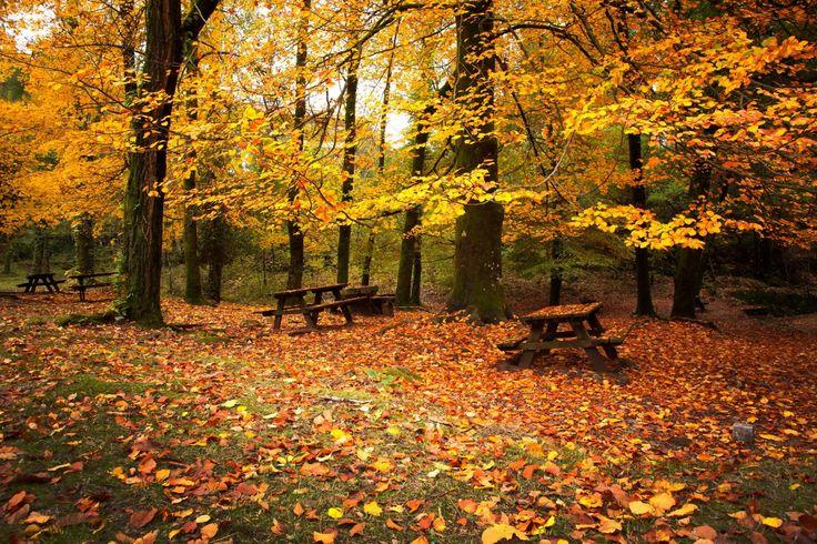 Jahreszeiten Herbst Park Bank (Möbel) Blattwerk Natur                                                                                                                                                                                 Mehr