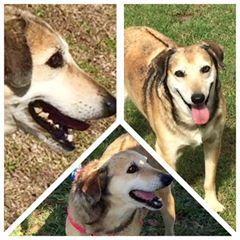 Save Our Dogs South Africa: Adoption offered Plettenberg bay