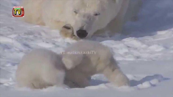 Детское обучающее видео про животных. Белый медведь.