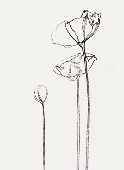 'icelandic poppies' by bernadette pascua