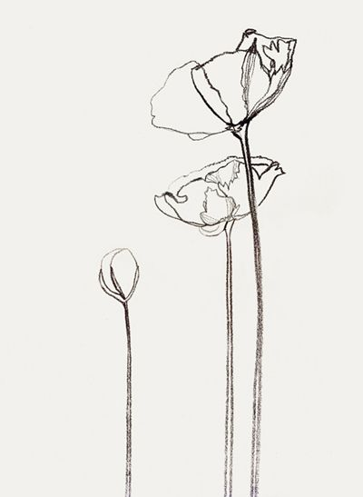 icelandic poppies. gestural contours are lovely.