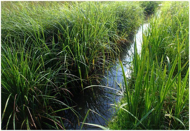 le fossé de drainage en juillet
