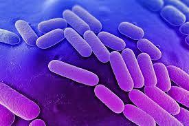 dna bacterien