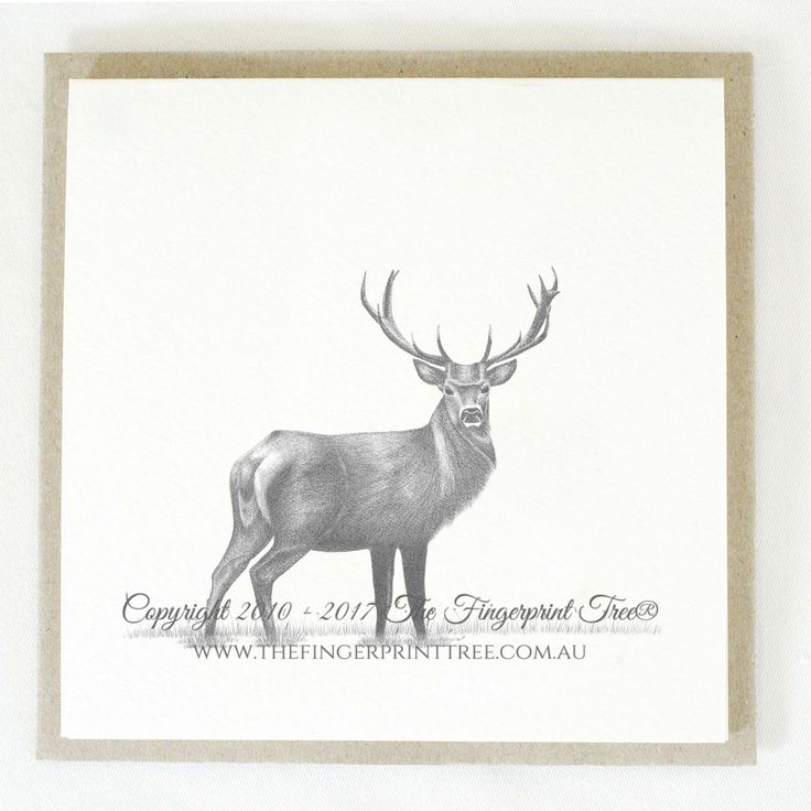 Gift card - Stag:  Cards! by The Fingerprint Tree® is our couture range of gift cards featuring illustrations by Ray Carter, Chief Artist & Founder.  Made-to-order and Giclée printed at our Southern Highlands studio.   We sell direct to the public and to retailers.