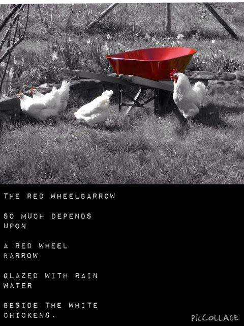 """Guiding on the Side Students use color splash app on an iPad or Photoshop on a PC as part of a """"The Red Wheelbarrow"""" analysis and own imagist poetry with accompanying photo!"""