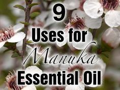 Manuka essential oil has uses similar to Manuka Honey. The oil contains antihistamine as well as many antimicrobial, antiviral and antibiotic properties