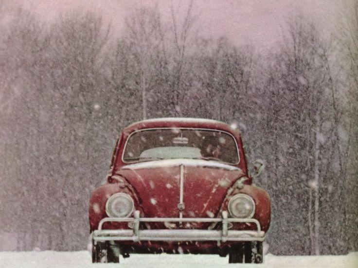 Red Beetle in Snow @i love vuska