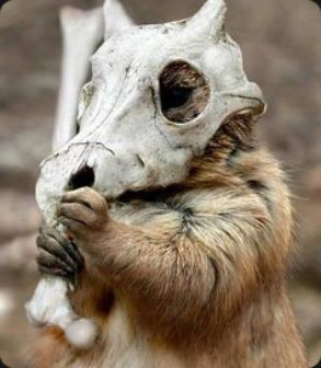 Cubone IRL.: Halloween Parties, Real Life, The Real, Funny Animal Pictures, Halloween Costumes, Photos Manipulation, Funny Pictures, Crazy Animal, Fabulous Hair