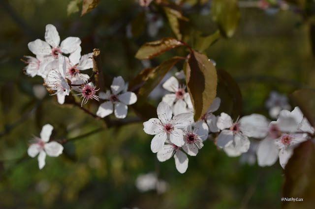 NathyLux: Parc Tony Neuman - Luxembourg ville - Flowers