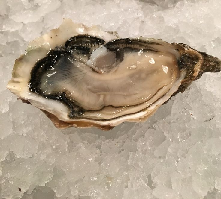 """Oyster """"ostra d'or"""" from French Normandy farmed by Helie!"""