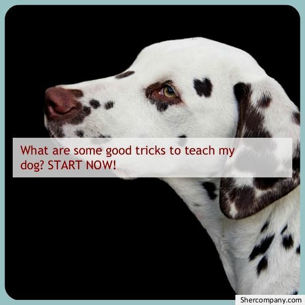 Most Up To Date Free Of Charge Dog Training Tricks