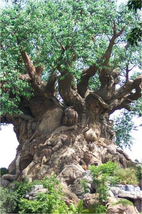 "This tree was created as the symbol for Animal Kingdom Park at Disney World in Orlando, Florida. The ""Tree of Life"" is not a real tree but has 350 images of animals carved on it. Very impressive!"