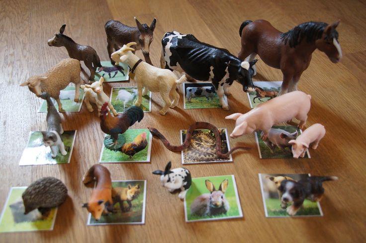 Mit dem PC erstellte ich kleine laminierte Kärtchen, die Fotos aller Tiere zeigen, welche wir auch als Schleich-Figuren haben.