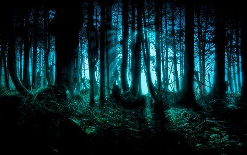 Darkness falls upon the forest as an icey chill passes over me.