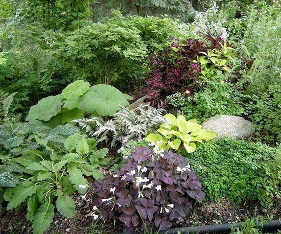 Les 87 meilleures images du tableau plantes d 39 ombre sur for Amenagement jardin 974