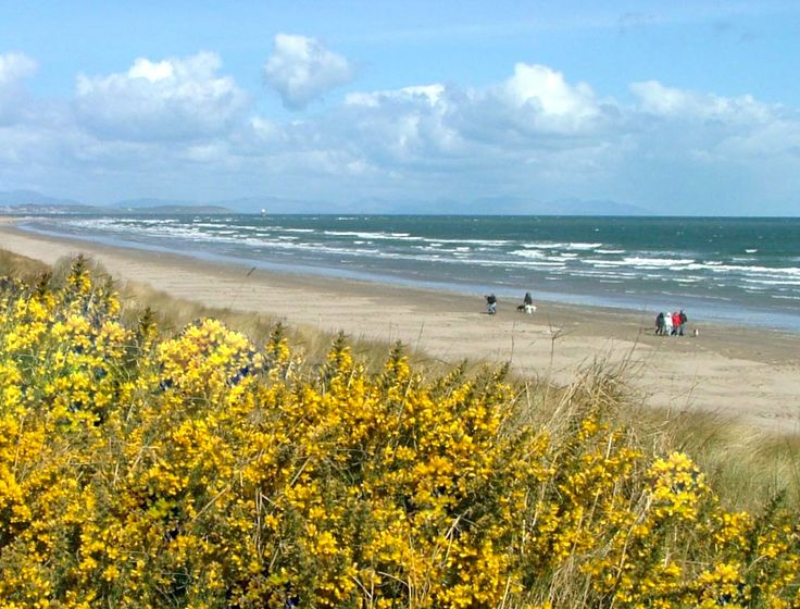 Bettystown beach six miles of sandy beach great for long walks, with coffee and treats in beachside 'Relish' on the way home.
