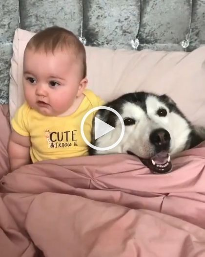 they are so adorable 3 3 3 baby adorable dog funny gif