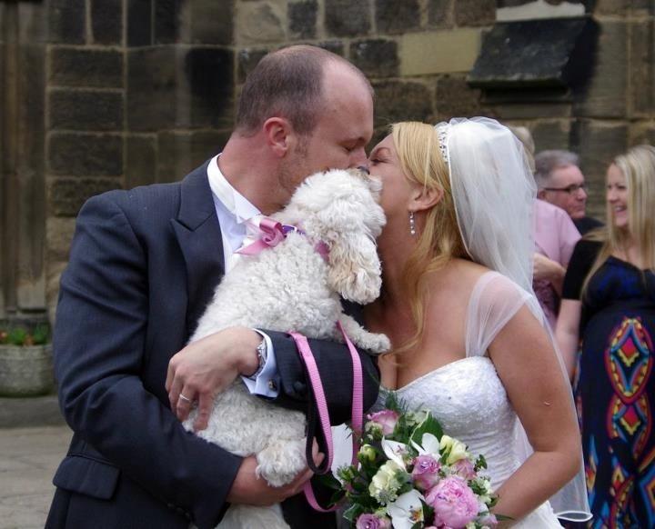 Cavapoo Wedding Kiss