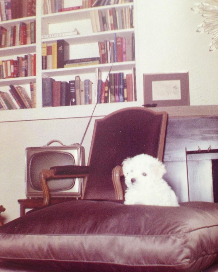 A Photograph Of Marilyn S Little Dog Maf Taken By In 1961 The