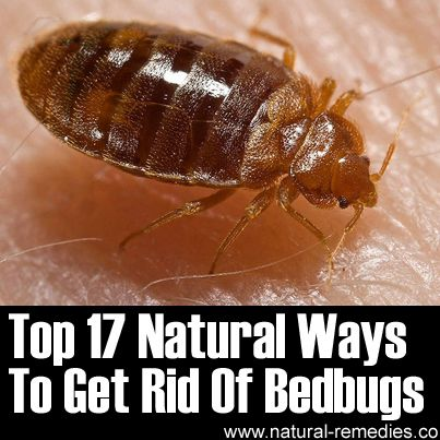 ❤ Please share with your bedbug hating friends! They will thank you for it. ❤