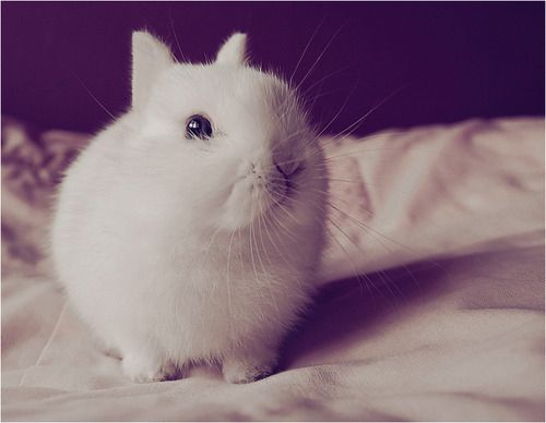 OH. MY. GOSH. HOW IS THIS EVEN POSSIBLE?! NO RABBIT CAN POSSIBLY BE THIS CUTE!