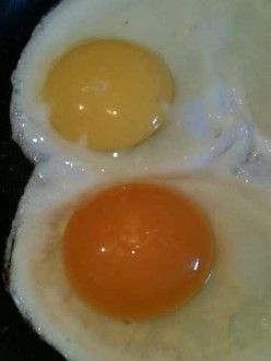 Pastured eggs, organic eggs, and conventional eggs...which has the most nutrients?