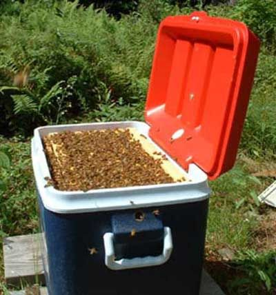 Polystyrene nucs hive modification kit modern bee hive for Modern hive