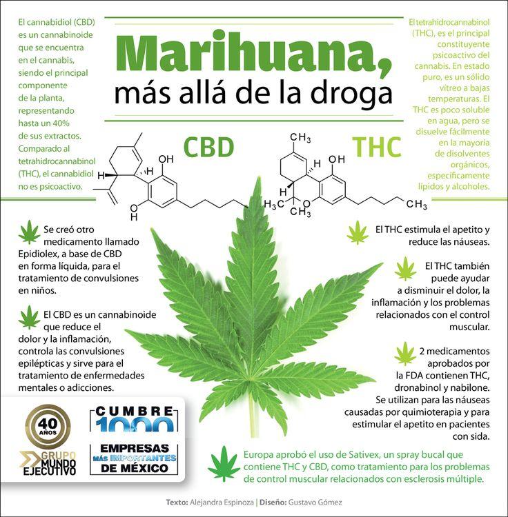 Marihuana, más allá de la droga