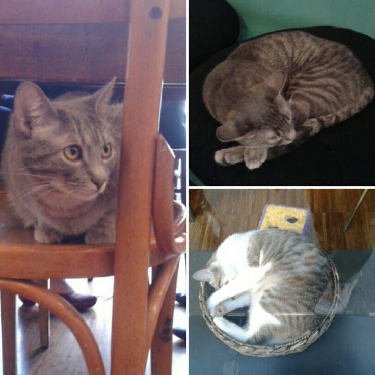 crazy_cat_cafe_3