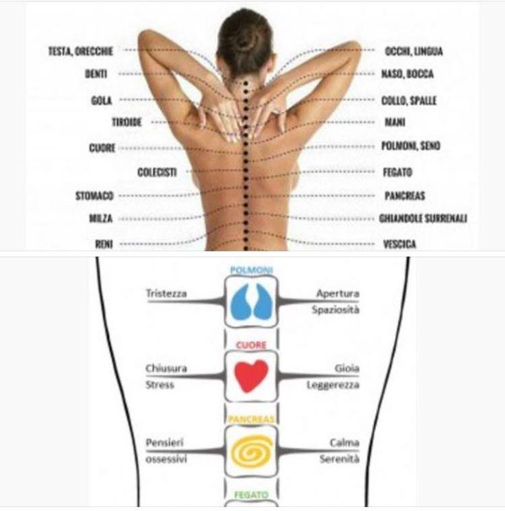 Come la colonna vertebrale è connessa a tutti gli organi e alle emozioni #ime #colonnavertebrale