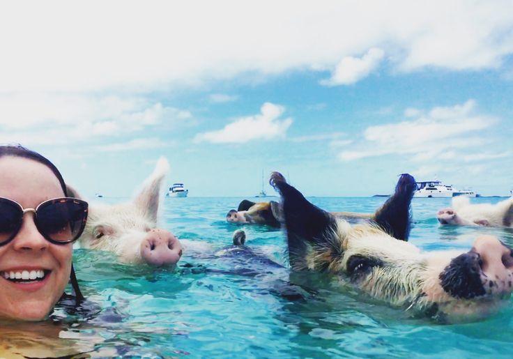 Swimming pigs Exuma Islands  @bltoney_