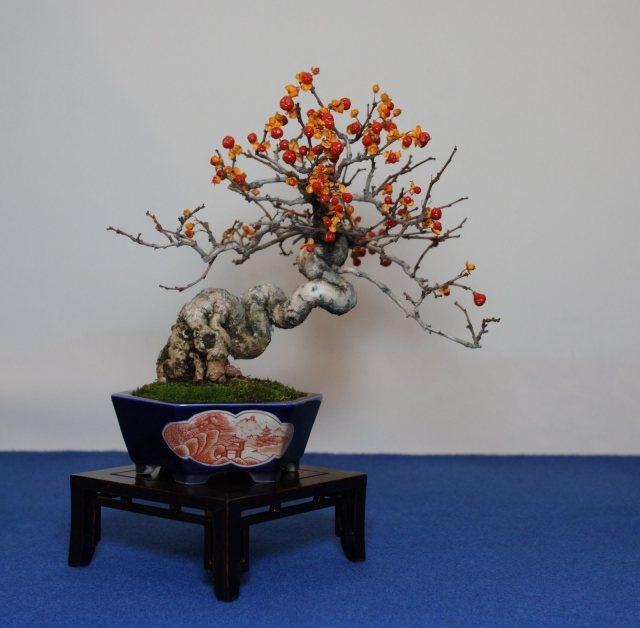 Tsuru-modoki Oriental bittersweet
