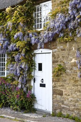 Wisteria, photo by Alamy. I like wisteria climbing on a house even more than on an arbor.