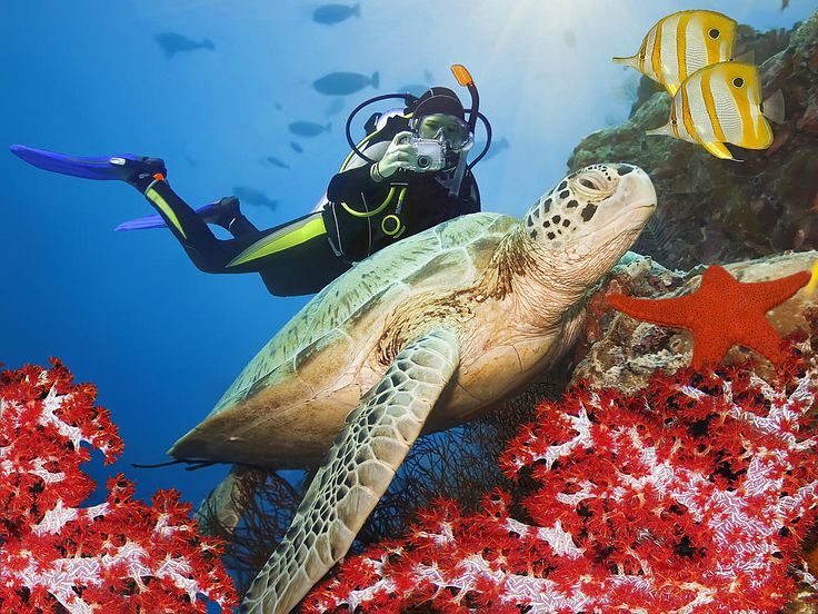 Ägypten - Tauchen Marsa Alam | Elphinstone Reef - Dolphin House ...