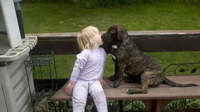 pitbull girls kissing nakey