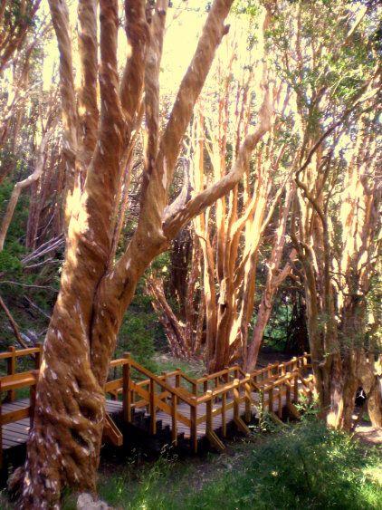 Por tierra, desde la casi inmediata localidad de Villa La Angostura comienza un sendero peatonal de casi 13 km que recorre la sección más interesante del área abierta al público, conectando esa localidad con el bosque de arrayanes. A 1 km de su inicio, se puede acceder también a un punto panorámico.
