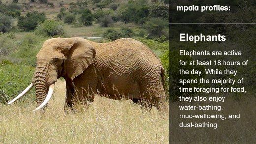 African River Wildlife Camera - Live Cams - explore
