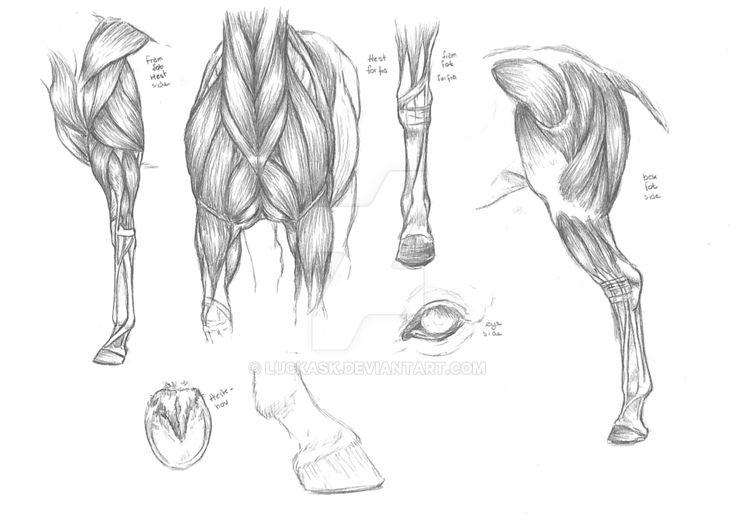 horse_anatomy_study_by_luckask-d9wo13z.png 1024 × 726 bildepunkter
